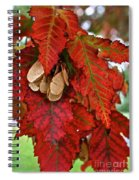 Maple Leaves And Seeds Spiral Notebook