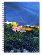 Maple Leaves On Mossy Rock Spiral Notebook