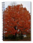 Maples In The Meadow Spiral Notebook