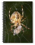 Marbled Orb Weaver Spider Eating Spiral Notebook