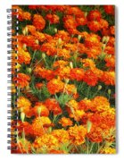 Marigold Spiral Notebook