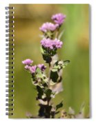 Marsh Fleabane  Spiral Notebook