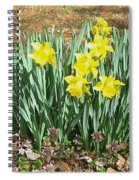 Mary's Daffodils Spiral Notebook