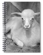 Marys Little Lamb... Or Kid In Black And White Spiral Notebook