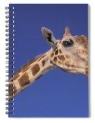 Masai Giraffe, Serengeti, Africa Spiral Notebook