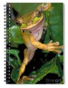 Masked Treefrog Spiral Notebook