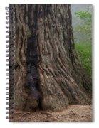 Massive Redwood And Fog Spiral Notebook