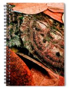 Mata Mata Turtle Spiral Notebook