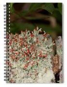 Matchstick Lichen Spiral Notebook