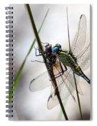 Mating Dragonflies  Spiral Notebook