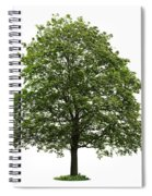 Mature Maple Tree Spiral Notebook
