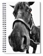 Me So Horsey Spiral Notebook