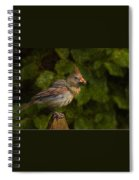 Meal Time Spiral Notebook