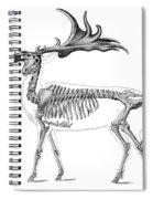 Megaloceros, Cenozoic Mammal Spiral Notebook
