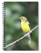 Mellow Lady Spiral Notebook