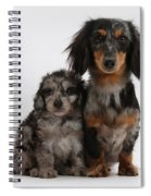 Merle Dachshund And Doxie Doddle Pup Spiral Notebook