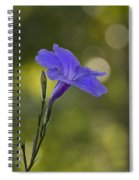 Mexican Petunia Spiral Notebook