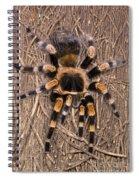 Mexican Red-legged Tarantula Spiral Notebook