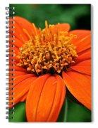 Mexican Sunflower Spiral Notebook