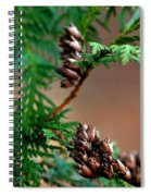 Michigan Cedar Cones Spiral Notebook