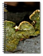 Michigan Jade Fungus Spiral Notebook