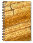 Micrograph Of A Goldfish Tail Spiral Notebook