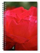 Mikado Tea Rose Spiral Notebook