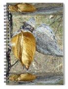 Milkweed Pods - Mirror Box Spiral Notebook