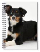 Mini American Shepherd Spiral Notebook