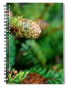 Mini Cone Spiral Notebook