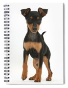 Miniature Pinscher Puppy Spiral Notebook