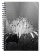 Miniature Tall Bearded Iris Named Consummation Spiral Notebook