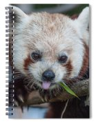 Mischievious Red Panda Spiral Notebook