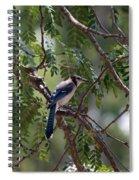 Mississippi Blue Jay Spiral Notebook