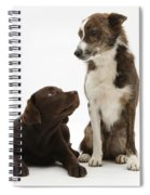 Mixed Breed And Chocolate Lab Spiral Notebook