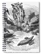 Mollusk Spiral Notebook