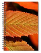 Molten Bronze Spiral Notebook