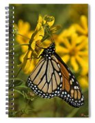 Monarch Butterfly On Tickseed Sunflower Din146 Spiral Notebook
