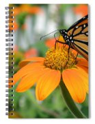 Monarch Butterfly On Tithonia Flower Spiral Notebook