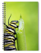 Monarch Caterpillar  Spiral Notebook