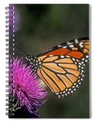 Monarch On Thistle 13f Spiral Notebook