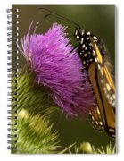 Monarch On Thistle 2 Spiral Notebook
