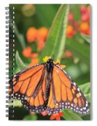 Monarch Sipping Spiral Notebook