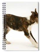 Mongrel Pup Spiral Notebook