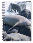Monk Seal Spiral Notebook