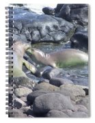 Monk Seals Spiral Notebook