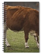 Moo Moo Cow Spiral Notebook