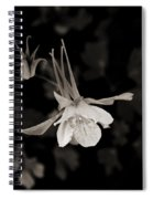 Moonlight Columbine Spiral Notebook