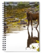 Moose Baby 2 Spiral Notebook