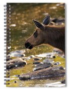Moose Baby 3 Spiral Notebook